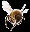 Honey in Skin Care